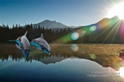 Dolphins in the Sierra?