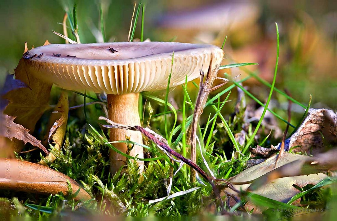 Final Image with Entire Mushroom in Focus